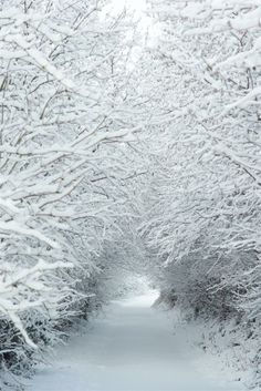 Snowy Tunnel