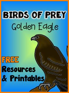 Birds of Prey: Golden Eagle - FREE printables plus links to interesting videos about birds of prey and falconry.