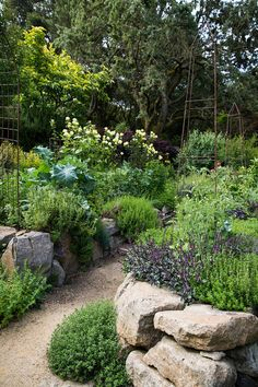 Stef' s kitchen garden photographed by the amazing Homestead Design Collective. Potager Garden, Diy Garden, Edible Garden, Shade Garden, Dream Garden, Garden Paths, Garden Landscaping, Garden Beds, The Secret Garden