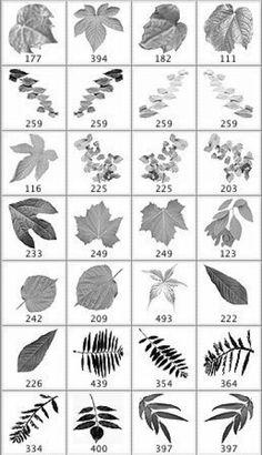 Leaves Photoshop Brushes