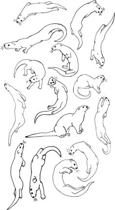 Otter Tattoo, Cute Animal Drawings Kawaii, Desenho Tattoo, Cute Creatures, Wildlife Art, Pictures To Draw, Mole, Cute Illustration, Otters