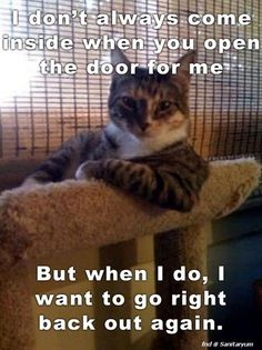 I hate cats, but this is funny.