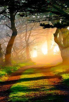 """djferreira224:  """"Into the Light"""""""