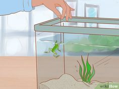 3 Ways to Play with Your African Dwarf Frog - wikiHow Dwarf Frogs, Pac Man, Habitats, Creatures, African, Play
