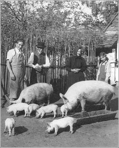 A jószág volt az aranya a népnek. Old Pictures, Old Photos, Central Europe, Eastern Europe, Farm Life, Historical Photos, Pigs, Budapest, Old Things