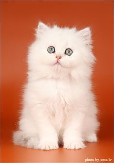 ❧ Adorables chatons ❧ 2