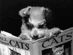 Animals Reading Books | ... animals and animal communication? Below are some books that are a must
