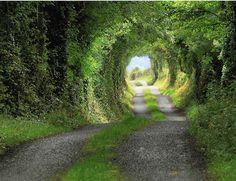 Camino Tunel Verde