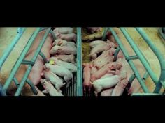 Without Saying a Word This 6 Minute Short Film Will Make You Speechless