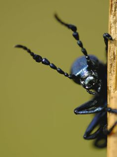 Bugs bugs bugs! Cool Bugs, Natural Forms, Peek A Boos, Conservation, Peeps, Peeping Tom, Beetles, Creepers, Spiders