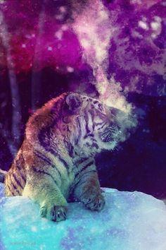 Galaxy ~ tiger