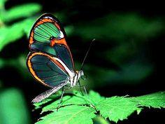 As borboletas mais bonitas da natureza fotos 18
