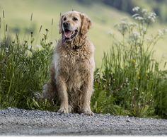 Ferien, Urlaub mit Hund, Engadin Scuol Samnaun, Graubünden, Schweiz