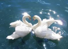 Mother Goose is teaching her 6 Beautiful Babies how to swim, & Swan couple are helping the babies. Nature Aesthetic, Blue Aesthetic, Aesthetic Photo, Aesthetic Pictures, Photo Wall Collage, Picture Wall, Baby Animals, Cute Animals, Photocollage