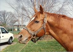 Secretariat loved to have his picture taken.