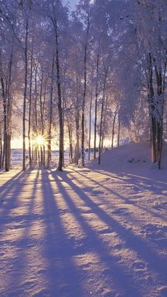 Even if you are not fond of winter, this collection of winter iPhone wallpaper photos will give you more reasons to like this time of the year! Winter Forest, Winter Magic, Snow Forest, Winter Love, Winter Snow, Winter Walk, Foto Picture, Winter Scenery, Winter Trees