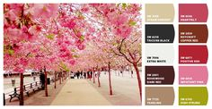 sweet pinks and rose colors cherry blossoms #chipit Paint colors from Chip It! by @Sherwin-Williams