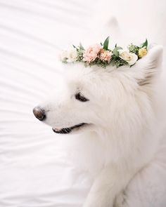 Adorable samoyed puppy dog with a floral crown. #petphotography #dog #samoyed