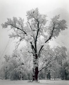 Another gorgeous Ansel Adams winter scene. When I grow up I want to be Ansel Adams.....