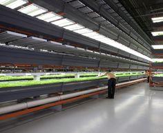 Nation's Largest Indoor Vertical Farm Opens Its Doors