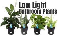 What are the Best Low Light Bathroom Plants, How to Make a Dark Room Brighter and What to Do in a Bathroom Without Windows? Small Bathroom Paint, Man Bathroom, Dark Bathrooms, Bathroom Plants, Cozy Bathroom, Basement Bathroom, Master Bathroom, Bathroom Ideas, Silk Plants