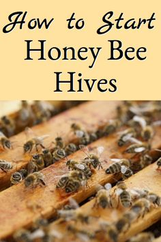 How to start honey bee hives explains the steps involved in starting a new honey bee hive starting with honey bee packages and also has pictures to demonstrate how hiving honey bee packages is done. Honey Bee Box, Honey Bee Swarm, Hives And Honey, Honey Bees, Honey Bee Farming, Bee Hives Boxes, Bee Hive Plans, Beekeeping For Beginners, Raising Bees