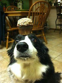 Congrats, Zelda! You earned that cupcake. | Meet Zelda, The Most Patient Border Collie In The World