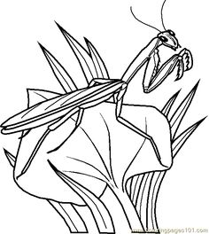 grasshopper coloring page 0002 1 coloring page free printable coloring pages
