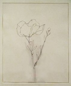Ellsworth Kelly | Poppy II, Nepenthe, Big Sur, 1984. Graphite on paper (1923-2015) Jack Shear in honor of Doris Fisher. SFMOMA