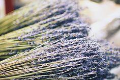 Lavender, Aix en Provence, France