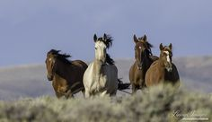 "Source:  wildhoofbeats.com/blog ""Spaying domestic horses in sterile, hospital conditions is one thing, and it is not a common practice. But most large animal veterinarians agree that the surgical e..."