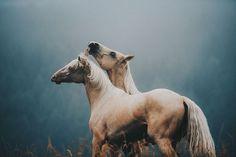 yy #Horse