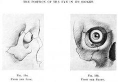 Anatomy of the eye socket eye orbit anatomy anterior2g anatomy artists anatomy eye ball in socket ccuart Image collections