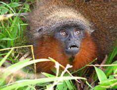 Des centaines de nouvelles espèces découvertes dans la forêt amazonienne (PHOTOS)
