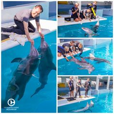 Dolphin Tale 2, Dolphin Reef, Dolphin Party, Bottlenose Dolphin, Dolphin Trainer, Art Painting Images, Job Goals, Ocean Park Hong Kong, Clearwater Marine Aquarium