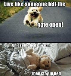 Simply funny pics