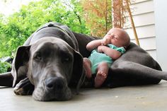 The Cutest Thing You'll See Today: 22 Kids and Their Big Dogs Photo