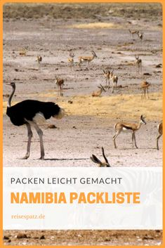 Namibia Packlist for your upcoming tranvel Africa Destinations, Top Travel Destinations, Places To Travel, Places To Go, Namibia Travel, Africa Travel, Safari Outfits, African Sunset, Mount Kilimanjaro