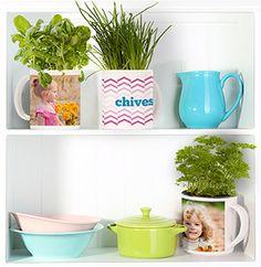 Enjoy fresh herbs this season with a family mug garden
