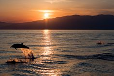Poetry in Nature - happy striped dolphin jumping outside the sea at sunset