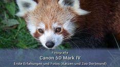 Zoo Dortmund, Sony Alpha 7 Ii, Sony A7r2, Fox, Animals, Tips And Tricks, Couple, Animales, Animaux