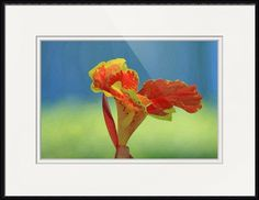 """""""Canna Lily Flower"""" by Karen Adams, Columbus, Ohio // A digital painting of a beautiful orange and yellow Canna Lily // Imagekind.com -- Buy stunning fine art prints, framed prints and canvas prints directly from independent working artists and photographers."""