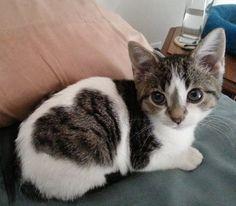 「ある日、わが家に『ハート泥棒』な猫がやってきた」…その理由に納得                                                                                                                                                                                 もっと見る