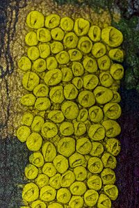 euphorbes-detail-F-Christien-br-credit-photo-Pierre-Brye.jpg