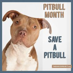PIT BULL MONTH OCTOBER
