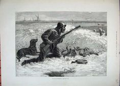 Illustrated London News_Wild Duck Hunting with a Lesser Newfoundlader or Labrador_1800-century.