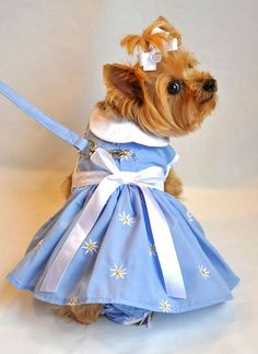Springtime Denim Daisy Dog Dress