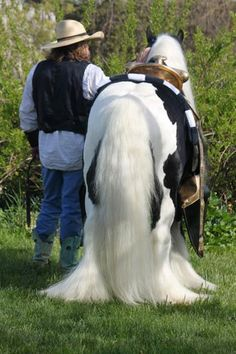 Our Gypsy Vanner horse Westmoreland Lucky.  Gypsy Feathers On the Ground