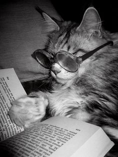 cat reading a book 1 Animals And Pets, Funny Animals, Cute Animals, Crazy Cat Lady, Crazy Cats, Cat Wearing Glasses, Cat Reading, Reading Books, Video Chat