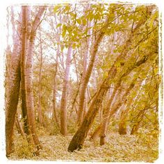 Estampa otoñal.9-9-2012